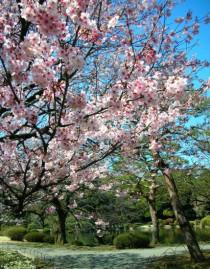 私の国である日本を愛しています